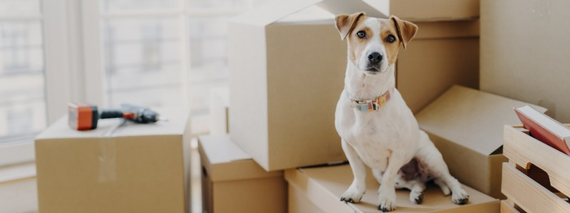 household relocation with pets
